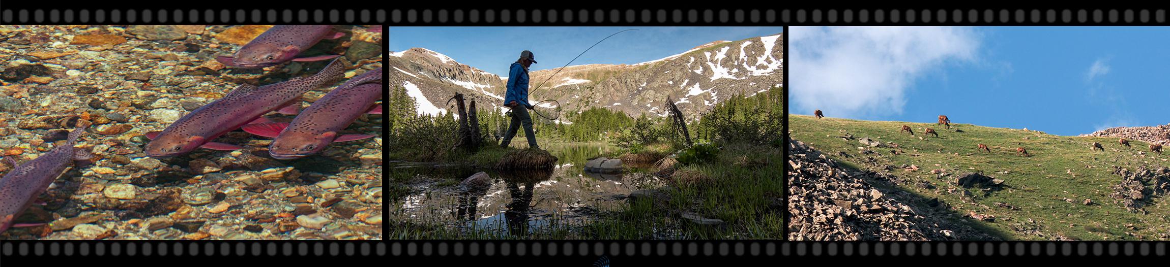 Kelley Moen High Country Colorado